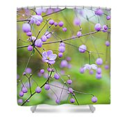 Chinese Meadow Rue Flowers Opening Shower Curtain