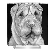 Chinese Sharpei Shower Curtain