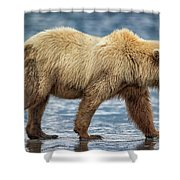 Chinitna Bay Brown Bear Shower Curtain