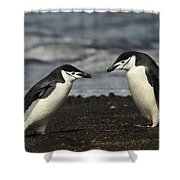 Chinstrap Penguin Duo Shower Curtain