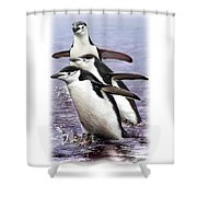 Chinstrap Penguins 1 Shower Curtain