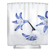 Chionodoxa - Glory Of The Snow Shower Curtain