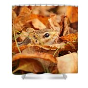Chipmunk Among The Leaves Shower Curtain