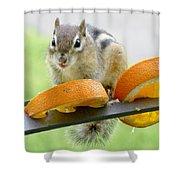 Chipmunk And Oranges 2 Shower Curtain