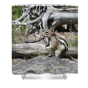 Chipmunk At Yellowstone Shower Curtain