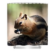 Chipmunk Eating A Piece Of Blue Candy Shower Curtain