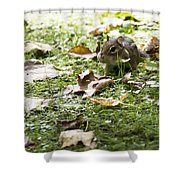 Chipmunk Getting Ready For Winter Shower Curtain
