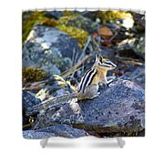 Chipmunk On The Rocks Shower Curtain