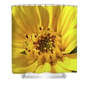 Chipmunk Planting - Sunflower Shower Curtain