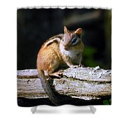 Chipmunk Portrait Shower Curtain