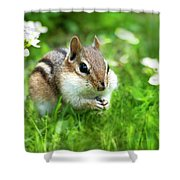 Chipmunk Saving Seeds Shower Curtain