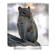 Chipmunk Up Close Shower Curtain