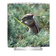 Chipmunk With Bokeh Shower Curtain