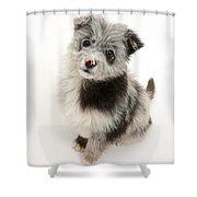 Chipoo Puppy Shower Curtain