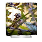 Chipping Sparrow In The Brush Shower Curtain