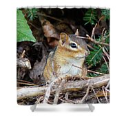 Chippy Shower Curtain