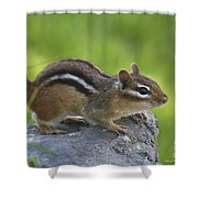 Chippy On The Move Shower Curtain