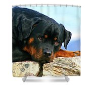 Chiron The Rottweiler  Shower Curtain