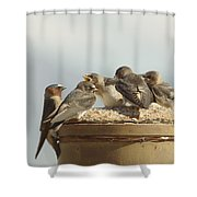 Chirping Swallows Shower Curtain