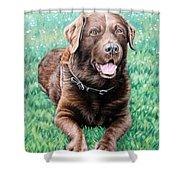Choco Labrador Shower Curtain