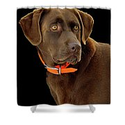 Chocolate Lab Shower Curtain by William Jobes