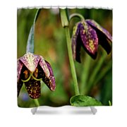 Chocolate Lily Shower Curtain