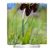Chocolate Lily Two Shower Curtain