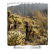 Cholla Cactus And Ocotillo Plants Shower Curtain