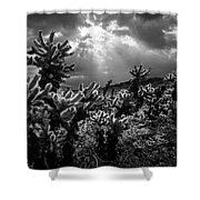 Cholla Cactus Garden Bathed In Sunlight In Black And White Shower Curtain