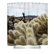 Cholla Cactus Garden Landscape Shower Curtain