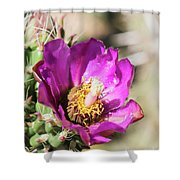 Cholla Flower Shower Curtain