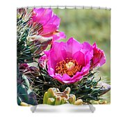 Cholla In Bloom Shower Curtain