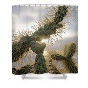 Cholla, Organ Pipe National Monument, Az  January 2015 Shower Curtain