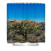 Cholla Shower Curtain