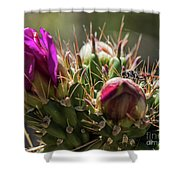 Cholla With Wasp Shower Curtain
