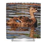 Christchurch New Zealand Grey Duck Shower Curtain