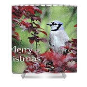Christmas And Blue Jay Shower Curtain