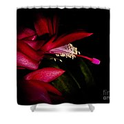Christmas Beauty Shower Curtain
