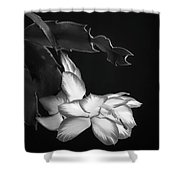 Christmas Cactus 8938bw Shower Curtain