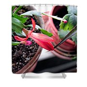 Christmas Cactus Bloom Shower Curtain
