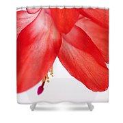 Christmas Cactus Macro Shower Curtain