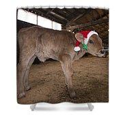 Christmas Calve Of Honor Shower Curtain
