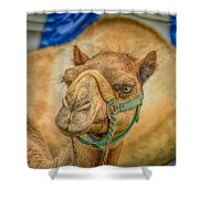 Christmas Camel On Call Shower Curtain