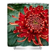 Christmas Chrysanthemum Shower Curtain