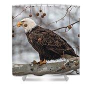 Christmas Eagle Shower Curtain