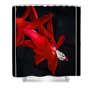 Christmas Flower Shower Curtain