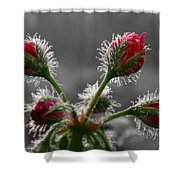 Christmas In May Shower Curtain by Lori Deiter