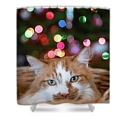 Christmas Kitty In A Basket Shower Curtain