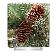 Christmas Pine Cones Shower Curtain