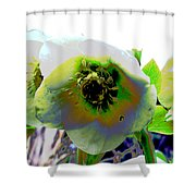 Christmas Rose  Shower Curtain